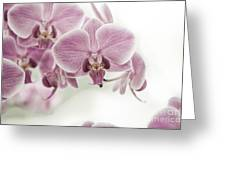 Orchid Pink Vintage Greeting Card