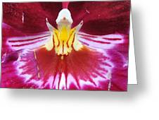 Orchid Pink Yellow White Greeting Card