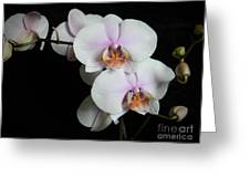 Orchid Portrait Greeting Card