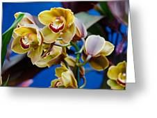 Orchid Pt 1 Greeting Card