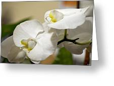 Orchid Purity Greeting Card