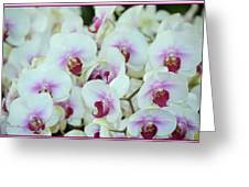 Orchid Sea Greeting Card