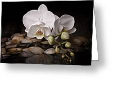 Orchid - Sensuous Virtue Greeting Card