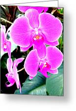 Orchid Series 1 Greeting Card