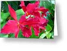 Orchid Series 3 Greeting Card