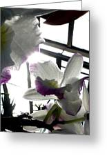 Orchid Series 4 Greeting Card