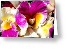 Orchid Series 6 Greeting Card