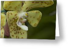 Yellow Dragon Orchid Greeting Card