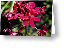 Orchid Study V Greeting Card