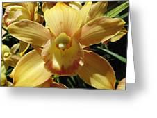 Orchid Sunshine Greeting Card