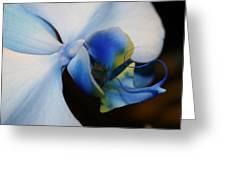 Orchid Taste Greeting Card