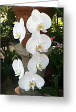 Orchid Tower Greeting Card