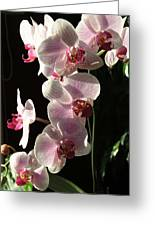 Orchid Tropical Blooms Greeting Card
