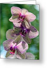 Orchid Two Greeting Card