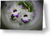 Orchid Wine Swirl Greeting Card