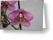 Orchid13 Greeting Card