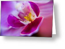 Orchide Detail Greeting Card by Kim Lagerhem