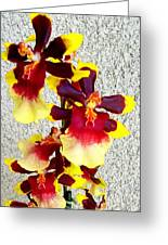 Orchids 17 Greeting Card