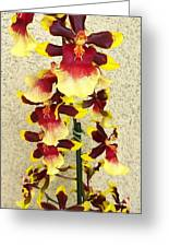 Orchids 18 Greeting Card