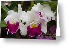 Orchids 198 Greeting Card