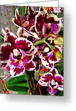 Orchids 21 Greeting Card