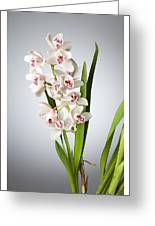 Orchids 4 Greeting Card