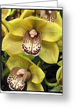 Orchids  9 Greeting Card