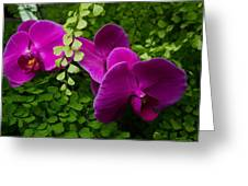 Orchids And Baby Tears Greeting Card