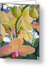Orchids And Buds Greeting Card by Robert Bray