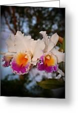 Orchid Elsie Sloan Greeting Card