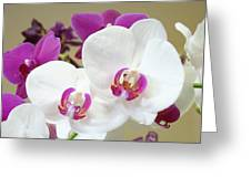 Orchids Floral Art Prints White Pink Orchid Flowers Greeting Card