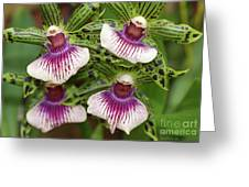 Orchids Four Greeting Card