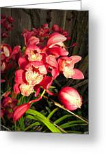 Orchids Galore Greeting Card