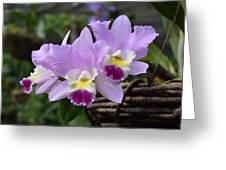 Orchids In A Basket Greeting Card