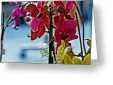 Orchids In A Window Greeting Card