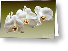 Orchids In Green Greeting Card