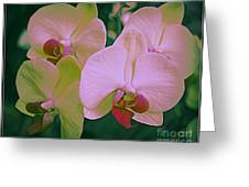Orchids In Pink And Green Greeting Card