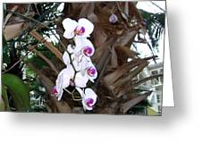 Orchids In The Opryland Hotel In Nashville Tennessee Greeting Card