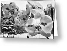 Orchids In Winter Greeting Card