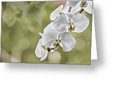 Orchids Greeting Card by Karen Walzer