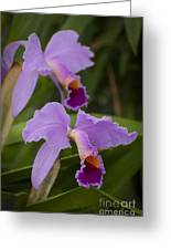 Orchids Pictures 1 Greeting Card
