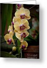 Orchids Pictures 10 Greeting Card