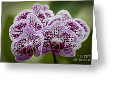 Orchids Pictures 11 Greeting Card
