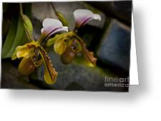 Orchids Pictures 30 Greeting Card