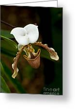 Orchids Pictures 31 Greeting Card