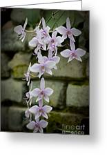 Orchids Pictures 47 Greeting Card
