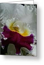 Orchid's Royal Carpet Greeting Card