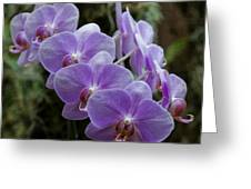 Orchids Square Format Img 5437 Greeting Card