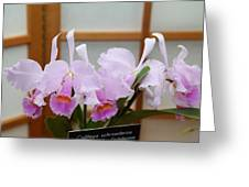 Orchids - Us Botanic Garden - 011315 Greeting Card by DC Photographer