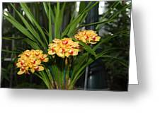 Orchids - Us Botanic Garden - 01137 Greeting Card by DC Photographer
